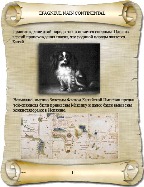 фото история породы папийон